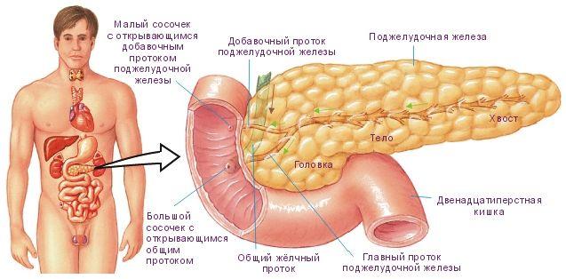 4 Найпростіших і ефективних рецепта для лікування підшлункової залози, про які лікарі замовчують