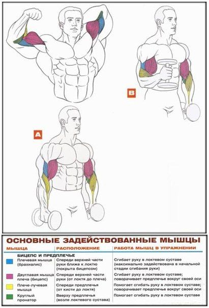 Як працюють м`язи в різних вправах!