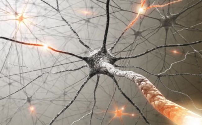 Які вітаміни допоможуть відновити і зміцнити нервову систему?