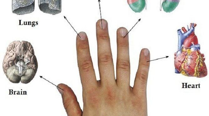 Кожен палець пов`язаний з двома органами: японський метод лікування за 5 хвилин!