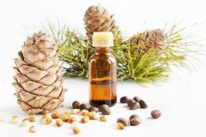 Кедрова олія подарунок природи: лікувальні властивості і протипоказання