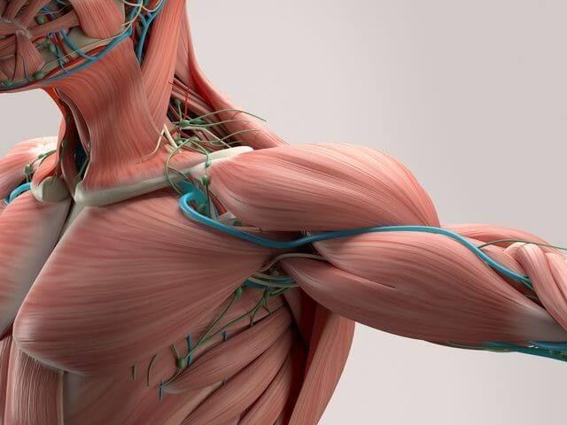 Мала грудний м`яз - джерело болю, про яке ви не здогадуєтеся