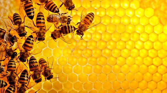 Що являє собою мед в сотах?