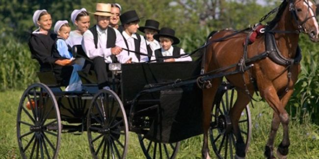 Чому амиши не хворіють на рак?