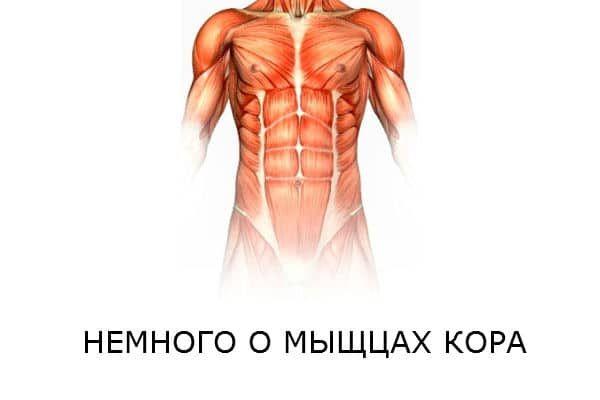 Чому м`язи кора необхідно тренувати всім і кожному
