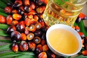 Чому громадськість проти пальмового масла? У чому його шкода, і чи є полза?
