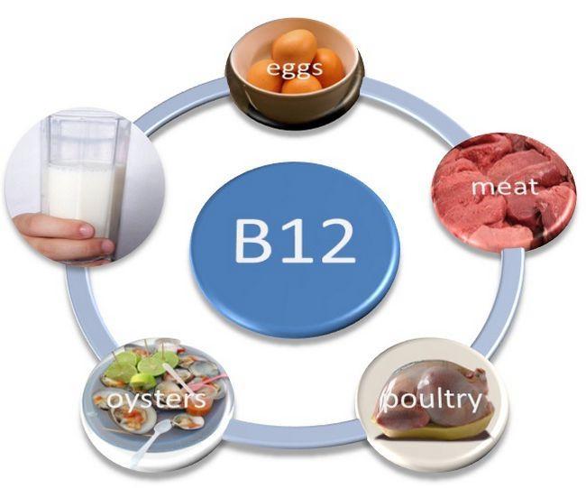 Інші продукти тваринного походження як основне джерело вітаміну в12