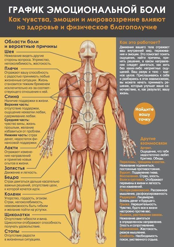 Сім сегментів м`язового панцира. Графік емоційної болю