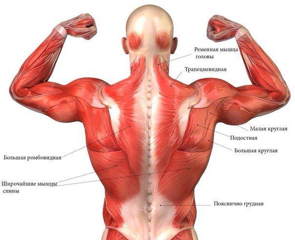 Вправи на спину. Працюють всі м`язи