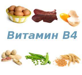 Вітамін в4 (холін) - що це таке, де міститься