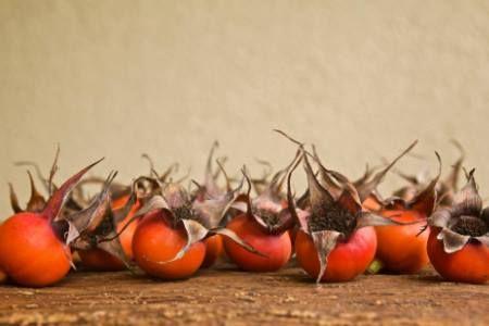 Заготівля плодів шипшини, їх властивості та застосування