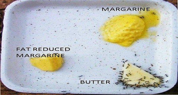 «Жирні» факти: масло проти маргарину